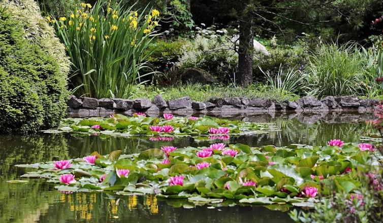 Smerfy w Ogrodzie Botanicznym